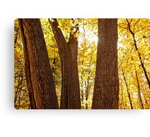 Trees of 3 Canvas Print