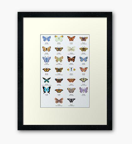 Butterfly Alphabet Framed Print