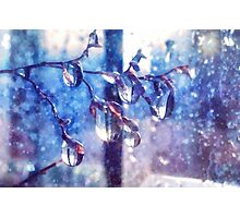 Crystal water drops on a branch Photographic Print