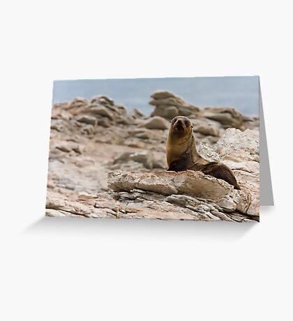 New Zealand Fur Seal Greeting Card