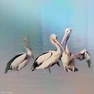 Pelicans Three By The Sea by wallarooimages