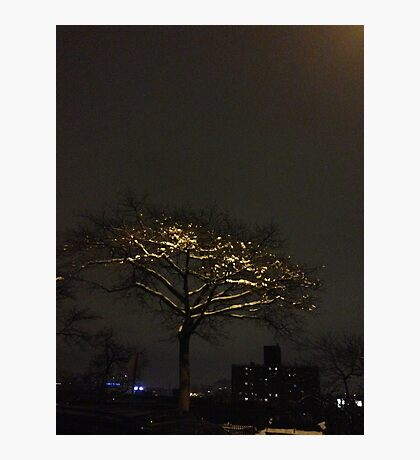 Snow tree, Harlem Photographic Print