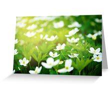 Nature background with little white flowers  Greeting Card