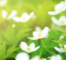 Nature background with little white flowers  Sticker