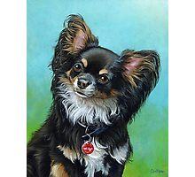 Butterfly eared black chihuahua portrait, acrylic painting Photographic Print
