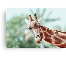 Northern Giraffe (Giraffa Camelopardalis) Portrait Canvas Print