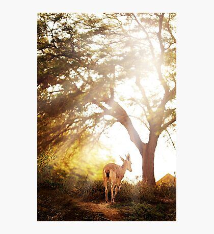 Goat in wonderful forest Photographic Print