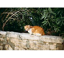 Red cat on the wall Photographic Print