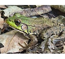 Green Frog Photographic Print