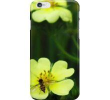 Shrubby Cinquefoil  iPhone Case/Skin