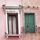 Venetian Windows and Pigeons  by BrookeRyanPhoto