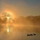 Landscape with Three Ducks by Kasia Nowak