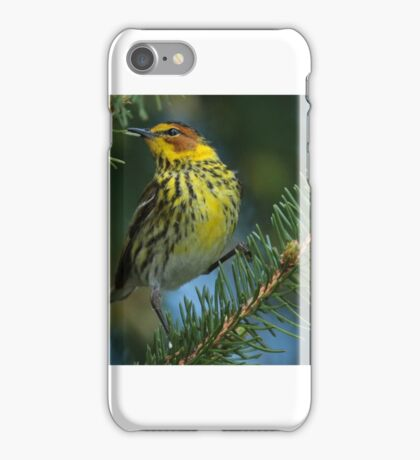 Cape May Warbler iPhone Case/Skin