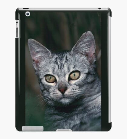 """Chat - Cat """" Peluche """" 01 (c)(h) ) by Olao-Olavia / Okaio Créations 300mm f.2.8 canon eos 5 1989  iPad Case/Skin"""