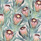 Pale Painted Protea Neriifolia  by micklyn