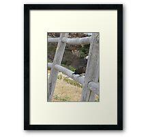 Bird perched Framed Print