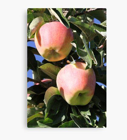 Apples Ready Canvas Print