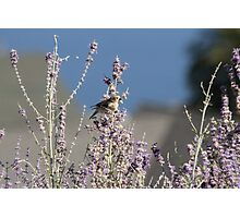 Feast For Birds Photographic Print