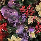 Christmas Colours.. by NaturesTouch
