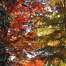 Fall Colors by debidabble