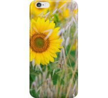 The live of the sunflowers 1 iPhone Case/Skin