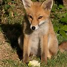Fox Cub and Apple by Neil Bygrave (NATURELENS)