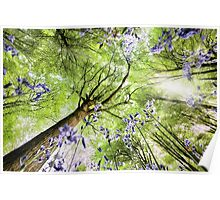 Bluebells viewed from a worms eye Poster