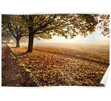 Amazing autumn leaves and trees Poster