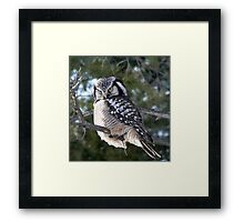 The look ~ Northern Hawk Owl Framed Print