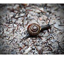 Brown Snail Photographic Print
