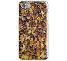 Fall Cover  iPhone Case/Skin