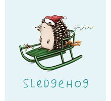 Sledgehog Photographic Print