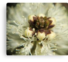 Buds in cradle Canvas Print