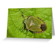 Green Shield Bug Greeting Card