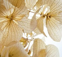 Paper Petals by photojeanic