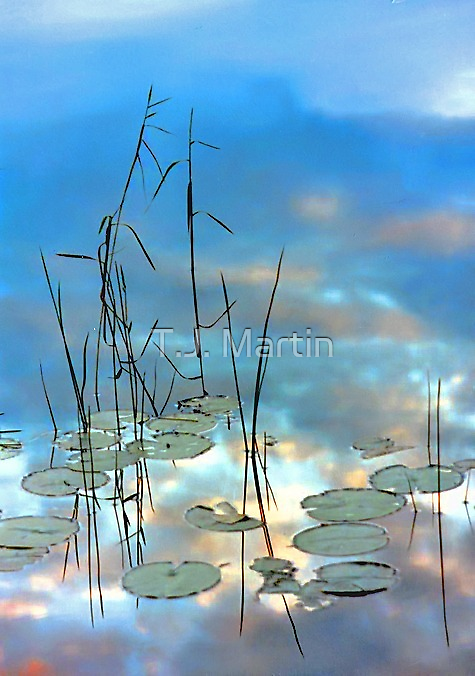 """""""Reflection - Reeds and Pond Lilies"""" by T.J. Martin"""