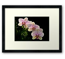 Spotted orchids Framed Print