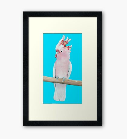 Major Mitchell Cockatoo painting Framed Print