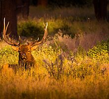Rest And Relaxation by John  De Bord Photography