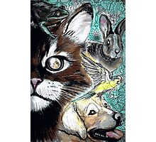 Tails from the Other Side: Proceeds to benefit Animal Rescue Photographic Print