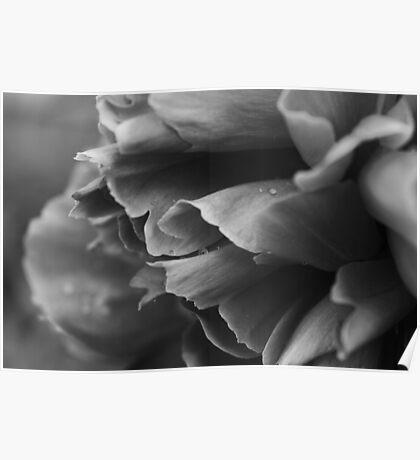Black and White Flower Poster