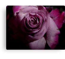 rose; light in the darkeness Canvas Print