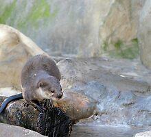 Otter by Henrik Lehnerer