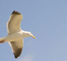Seagull by Henrik Lehnerer