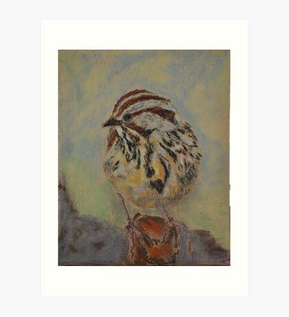 Lincoln's Sparrow Art Print