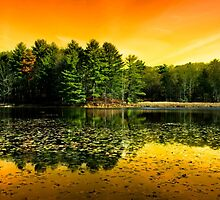Sunrise Reflection Landscape by Christina Rollo