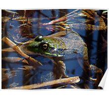 Pond Frog Poster