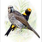 Regent Bowerbird Pair by carol brandt