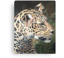 Oil painted leopard portrait Canvas Print