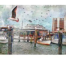 Birds Flying High, You Know How I Feel... Photographic Print